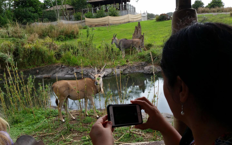 Safari at Animal Kingdom, Disney World, Florida USA, 2016