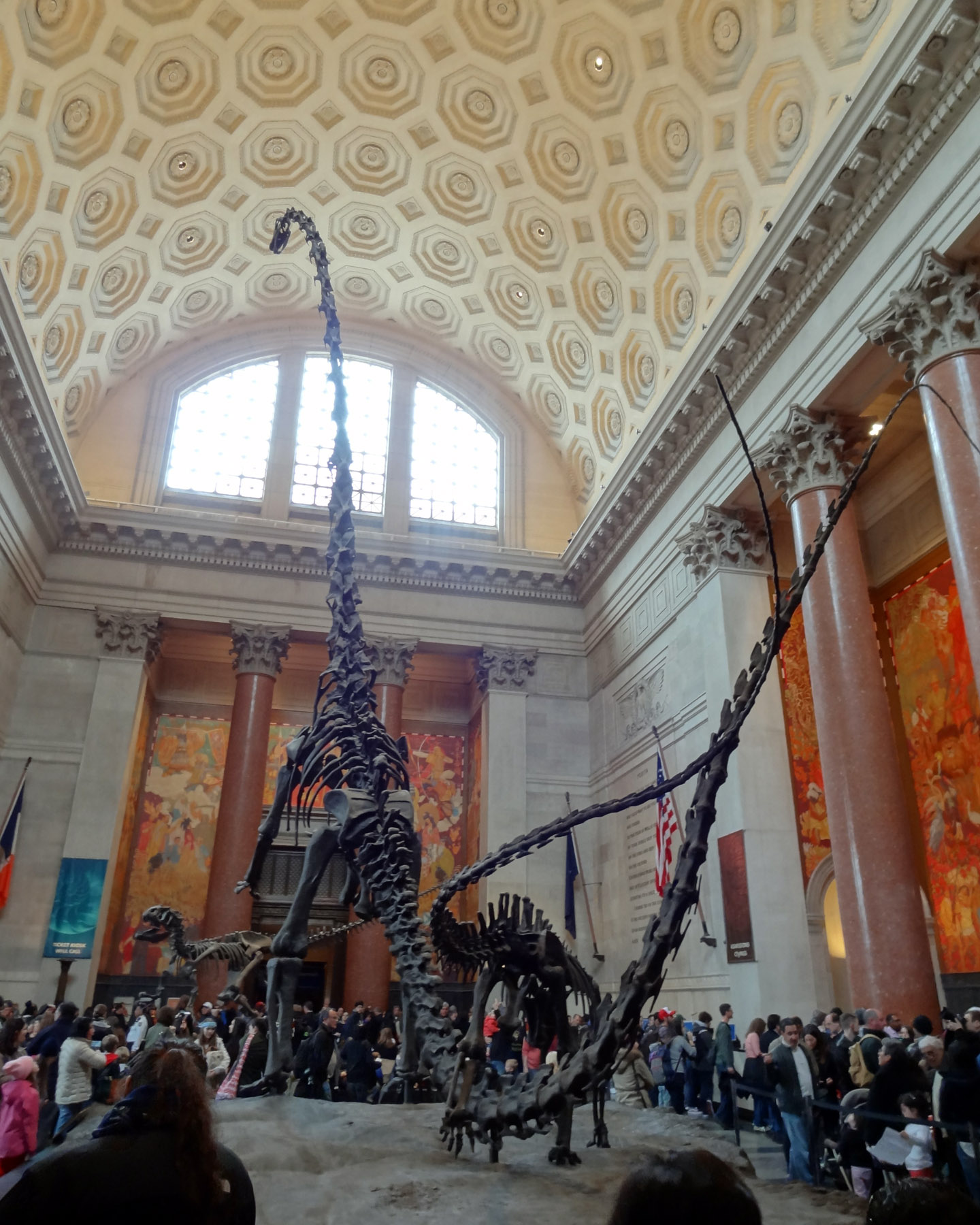 American Museum of Natural History, New York, USA 2014